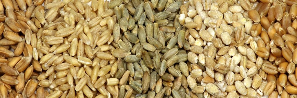 VacQPack USA Commodities General Grains